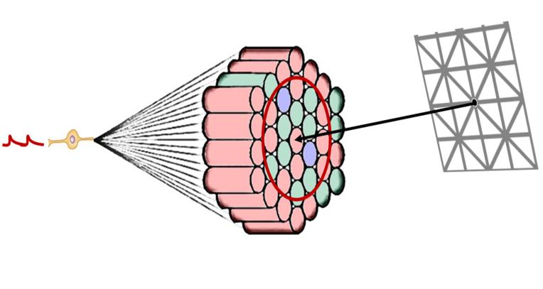 Retina6.png